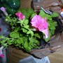 New flowers 2 March 2012