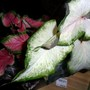 New flowers 3 March 2012