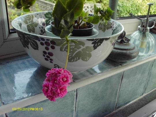 Unknown houseplant?