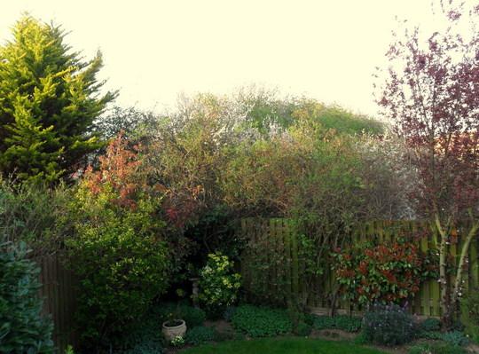 Evening light in the bottom garden