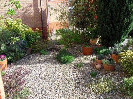 Gravel garden & pots