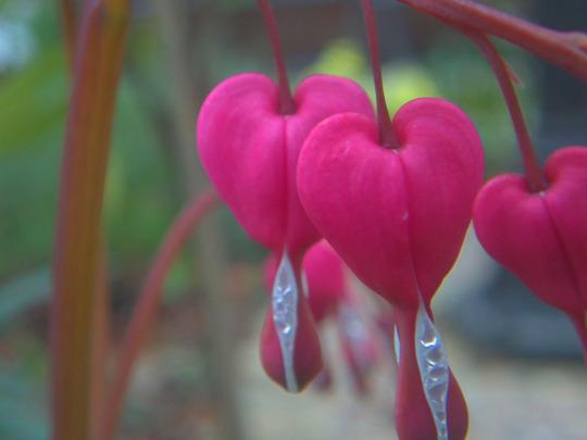 hearts again