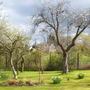 Plum, Cherry and Greengage Blossom