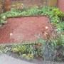 FRONT GARDEN IN THE RAIN