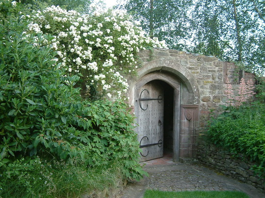 Rambling Rector Rose over the Grotto Stockton Bury