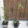 Garden 10 4 2012 002