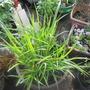 Garden 10 4 2012 004