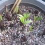 Garden_10_4_2012_033
