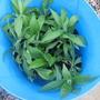 Garden 10 4 2012 010