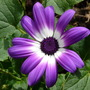 Flowers_2012_033