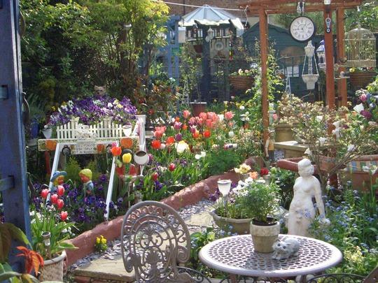 tulips in back garden