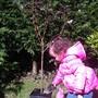 Amelies tree