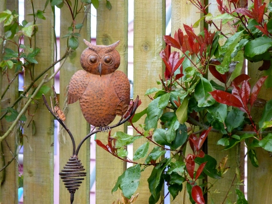 Rusty the Owl