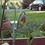 April_flowers_003
