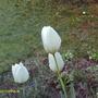 April_flowers_002