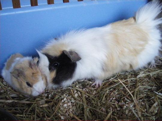 Honey Mummy and baby....