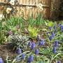 Cottage garden resurrected