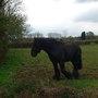 Tadpoles_horse_004