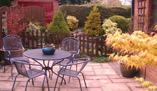 Back patio showing Acers coming into leaf.