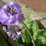 17.3.12_lilac_p1020423_edited