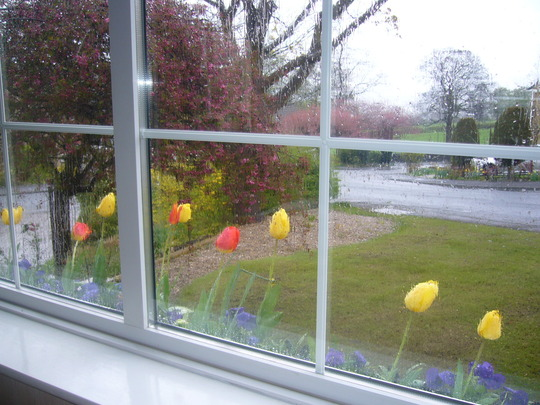 Tulips on a Very Rainy Day