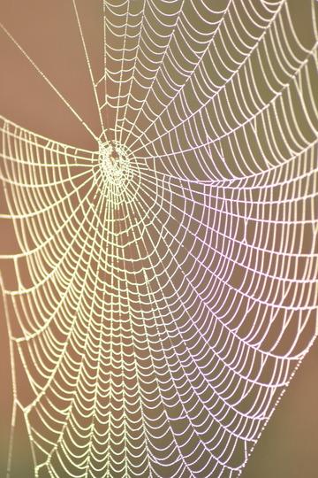 Crochet Cobweb!