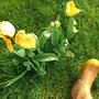 Tulips_and_wellies_060