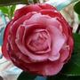 Flowers_2012_017_copy