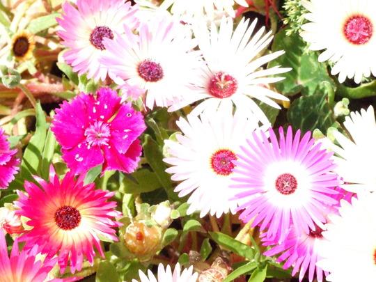 Jackie_s_Garden_Picture_s__19th_June_08_019.jpg