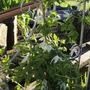 Garden Apr 2012 014