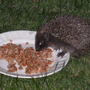 APRIL 2012 - OUR FRIEND CAME FOR SUPPER....