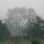 Misty_moisty_morning