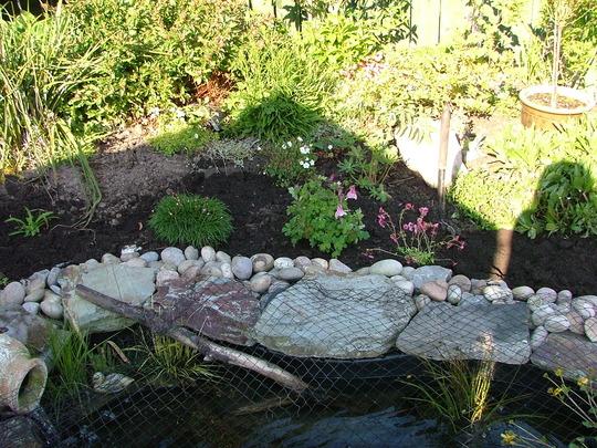 planting pond area