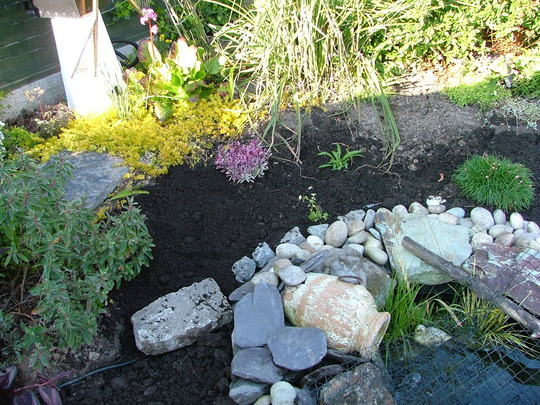 planting pond area 2