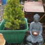 Fir Tree/Buddha