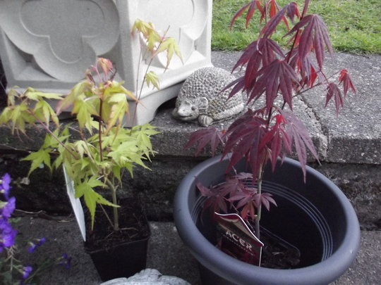 My First Acers....The Art of Placement