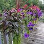 03 Kerstin s Gardens 8 21 08