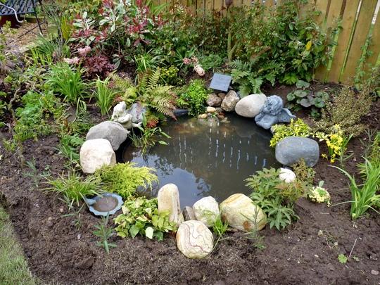 Pond latest...