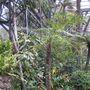 Botanical Building Balboa Park San Diego