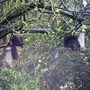 Black squirrels on the bird feeders