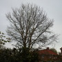 tree in neighbours back garden ,keeps out the light