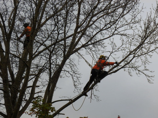 along come two tree workers
