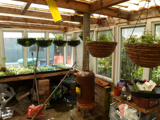 allotment greenhouse