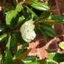 Imported_Photos_00071.jpg