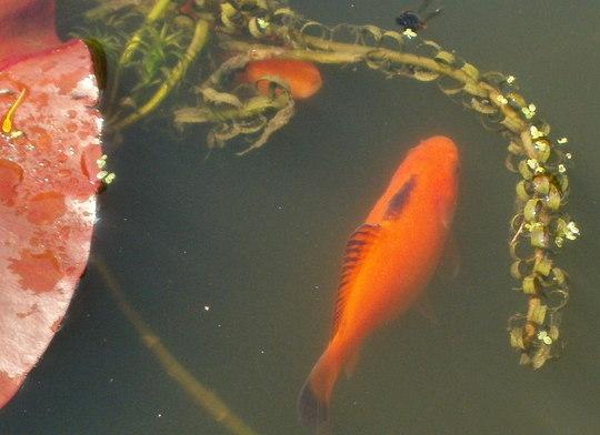 fish young