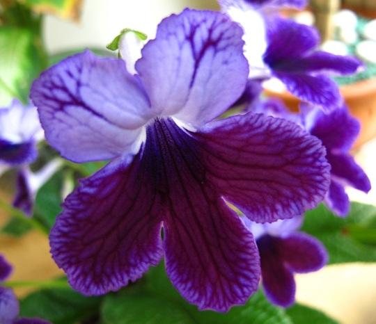 The colour purple?