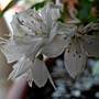 White_flowers_002