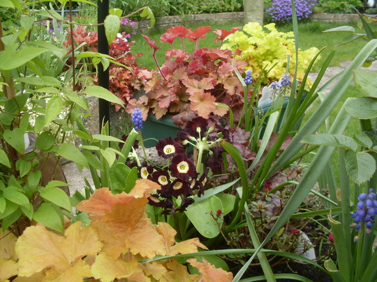 Heuchera & friends