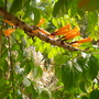 Quail_botanical_garden_pics_034