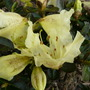 Flowers_2012_013